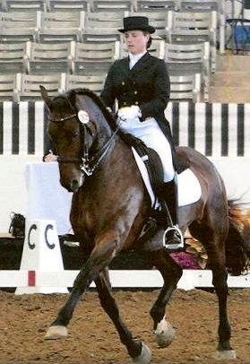 Main Book, Gold Elite, Friesian Sporthorse - Ducati CH