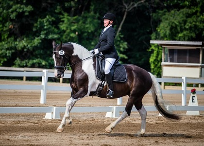 Friesian Sporthorse Second Level Champion
