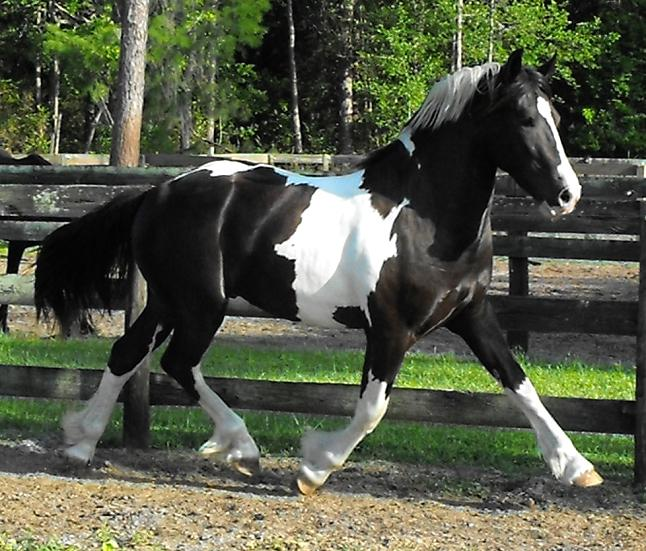 Mission home friesians pictures.